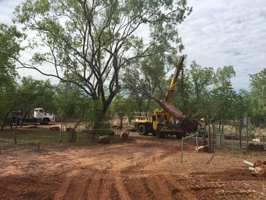 Relocation of Boab Trees